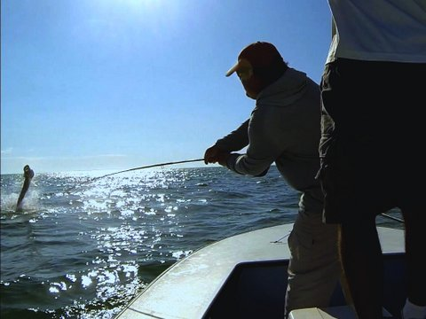 Boca Grande is Tarpon Capital of the World